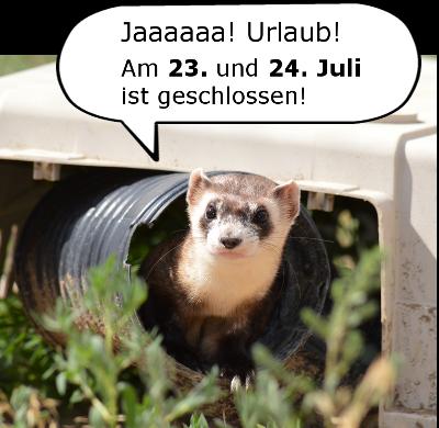 Urlaub Juli Otter